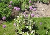 a garden in Charente